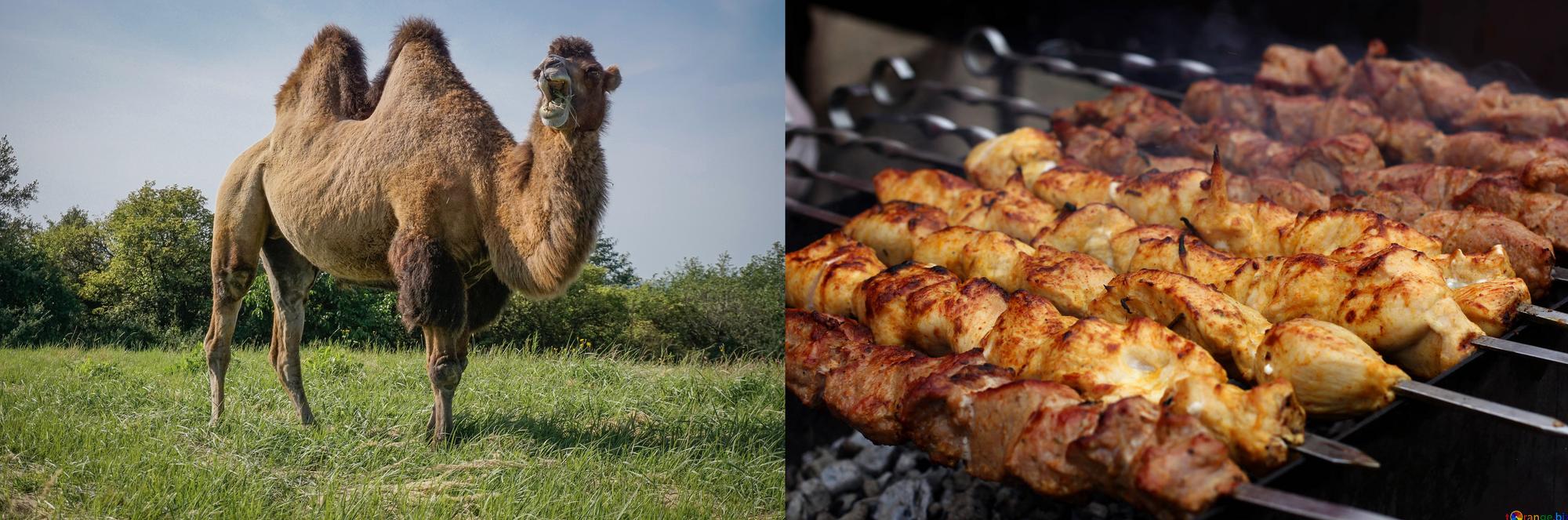 Angular CLI: camelCase or kebab-case
